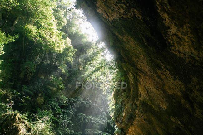 Клифф скалистых зеленый Каньон в солнечном свете — стоковое фото