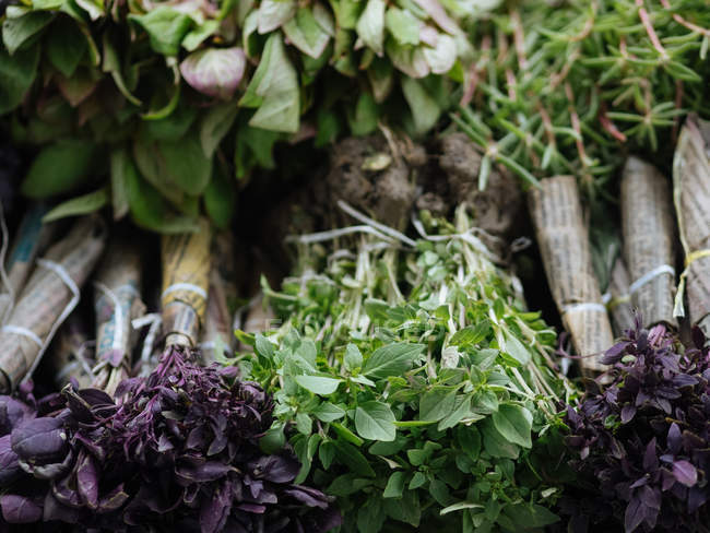 Bunches of fresh green and purple basil at farmer market — Stock Photo