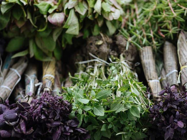 Bouquets de basilic vert et pourpre au marché fermier — Photo de stock