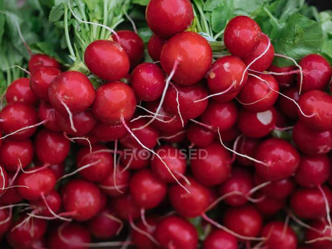 Montón de rábano rojo fresco en el mercado del granjero - foto de stock