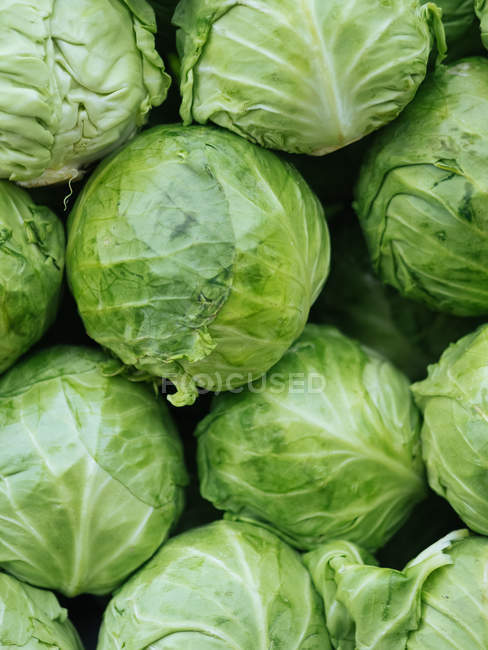 Heap of green fresh cabbages at farmer market — Stock Photo