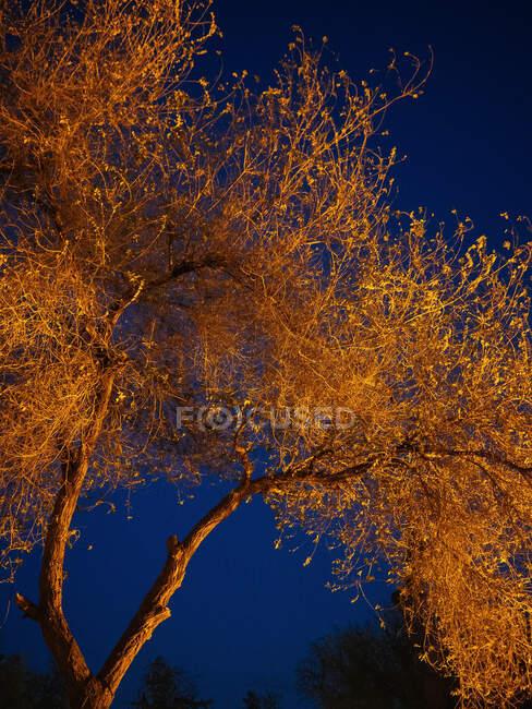 From below view of beautiful lush tree illuminated with golden light under dark night sky, Uzbekistan — Stock Photo