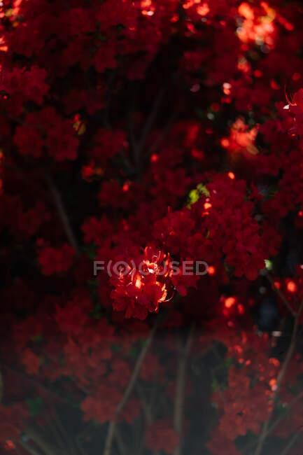 Красивые тропические ветви растений разбросаны яркими яркими красными цветами с сияющим солнцем на них с мягким фокусом — стоковое фото