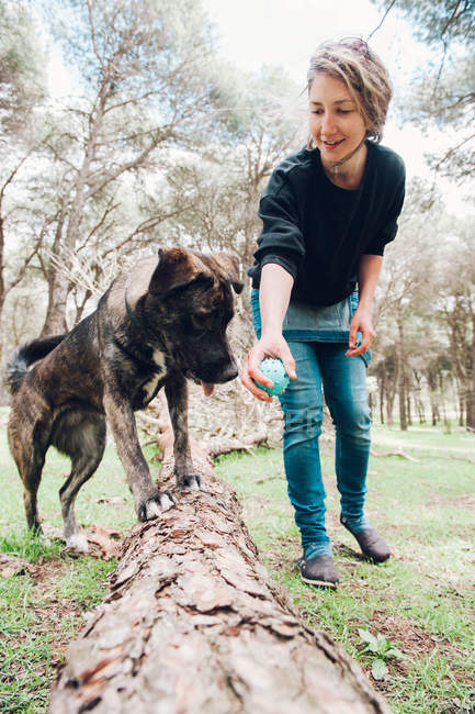 Big brown dog on log and owner playing in forest with ball — Stock Photo