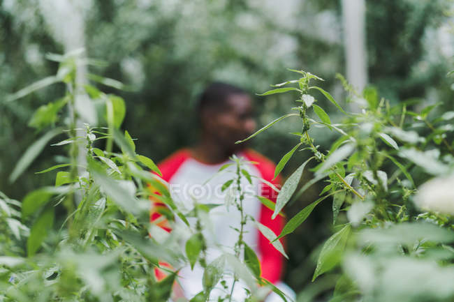 Green plants with African-American man standing on background — Stock Photo