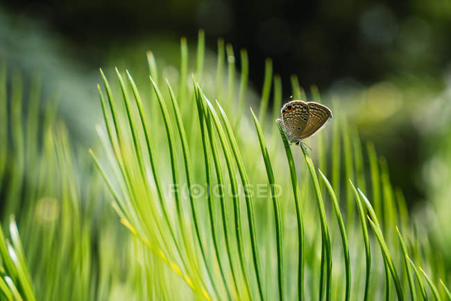 Close-up of tiny butterfly on lush green Cycas leaf in sunlight — Stock Photo