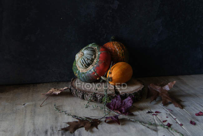 Colorful pumpkin composition on wooden piece on dark background — Stock Photo