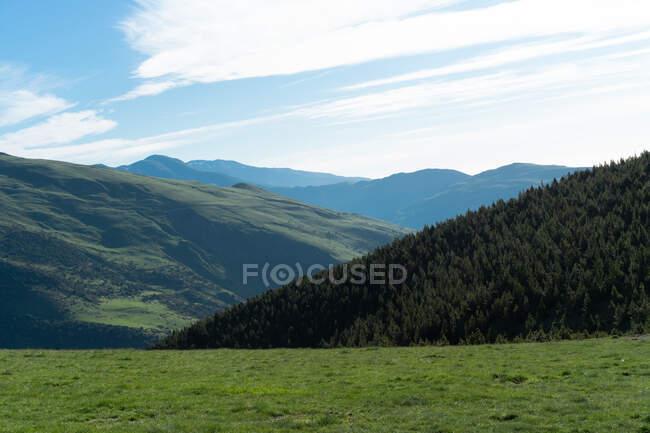 Perspectiva del valle de montañas verdes con árboles de coníferas bajo el cielo azul a la luz del sol de verano - foto de stock