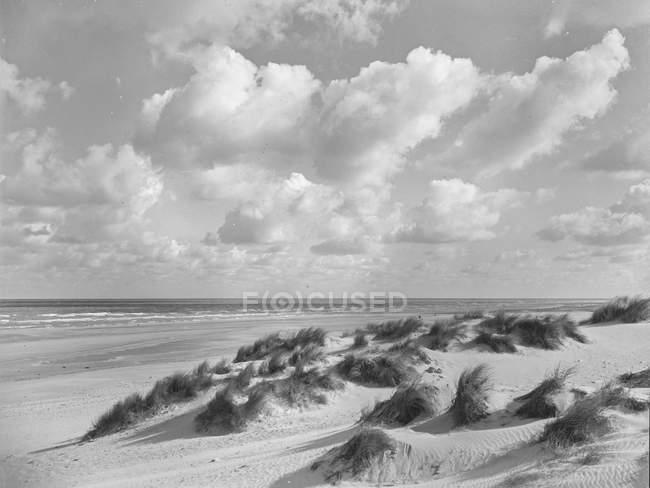 Littoral sablonneux avec herbe par temps venteux et nuageux — Photo de stock