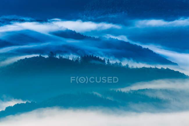 Туман над зимовим лісом — стокове фото