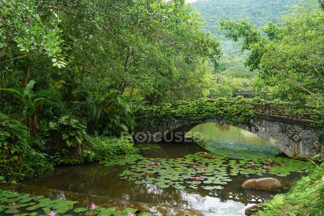 Ponte di paesaggio di pietra coperti di muschio invaso sopra acqua di stagno nella lussureggiante foresta pluviale tropicale Yanoda, Cina — Foto stock