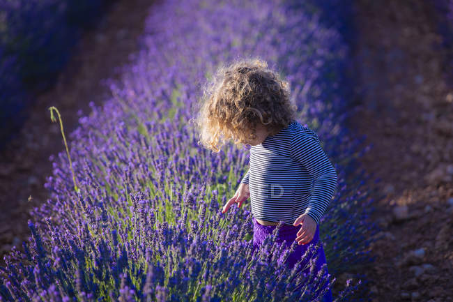 Focused curly girl standing in bush of blooming lavender flowers in field — Stock Photo