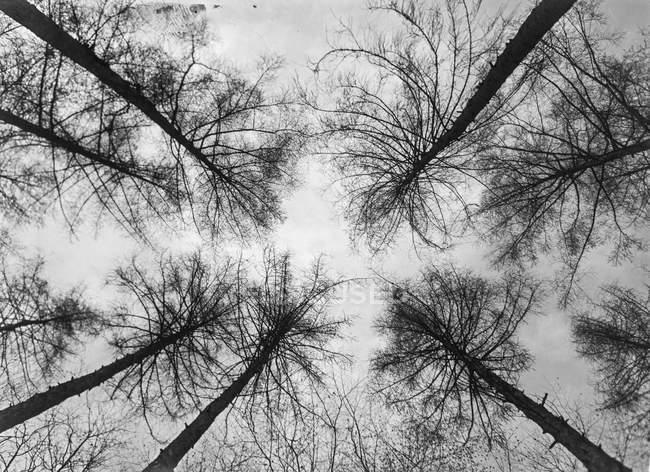 Preto e branca vista de árvore sem folhas de alta contra o céu — Fotografia de Stock