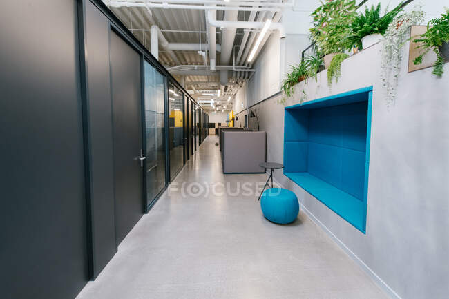 Interior design of hallway in contemporary company office with colorful elements and flowerpots in decoration — Stock Photo