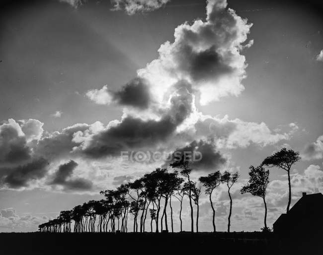 Árboles que crecen en tierras bajo el cielo con nubes y sol brillante - foto de stock