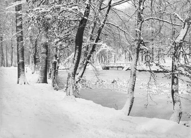 Agua helada del río rodeada de árboles cubiertos de nieve en invierno - foto de stock