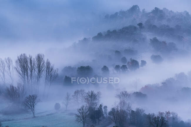 Vista incredibile di fitta nebbia che copre bella foresta in inverno. — Foto stock