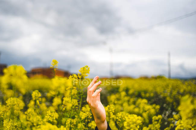 Female outstretching hand among yellow fresh flowers in field with clouds on background — Stock Photo