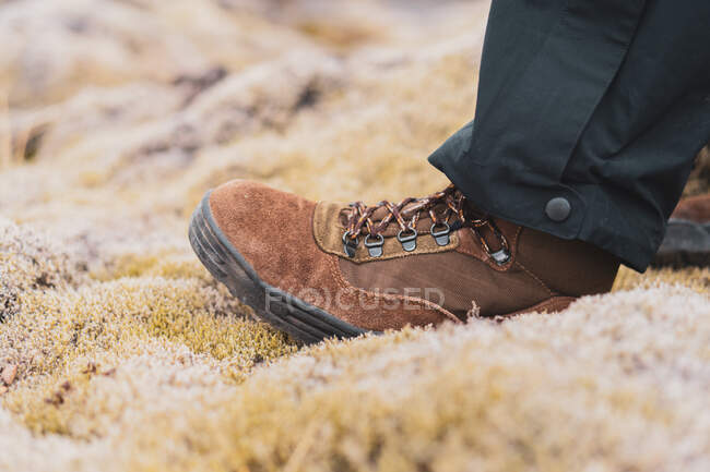 Vista da colheita do pé em botas de trekking de camurça marrom pisando em pedras totalmente cobertas por musgo amarelo curto macio? na Islândia — Fotografia de Stock