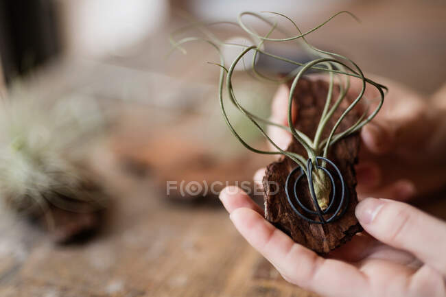 Crop closeup view of woman showing unusual decoration made of tree bark and rambling plant — Stock Photo