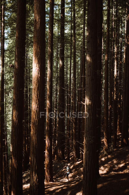 Back view of young male with backpack standing on forest walkway looking through tress in Cantabria, Spain — Stock Photo
