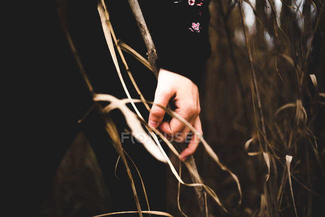Female hand in black touching dried twig in field — Stock Photo
