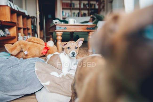 Lovely curious puppy lying on blanket — Stock Photo