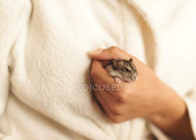 Gros plan du hamster mignon de la main de l'homme tenue — Photo de stock
