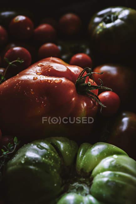 Свіжі взяв дозрів і незрілі помідори в купи — стокове фото