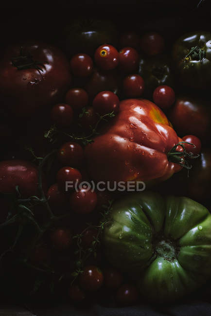 Fresh picked ripe and unripe tomatoes in heap — Stock Photo