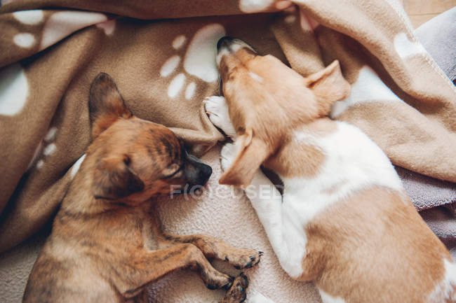 Mignons chiots dormir ensemble — Photo de stock