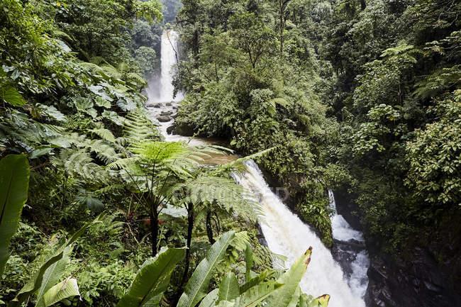 Cascade en forêt tropicale verte, Costa Rica, Amérique centrale — Photo de stock