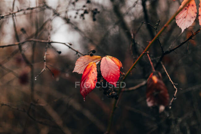 Small orange leaves on branch — Stock Photo