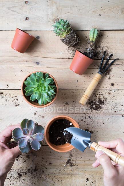 Ковчег саджає чудові кактусові рослини. — стокове фото