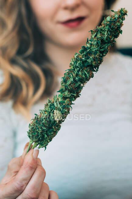 Mujer sosteniendo planta de marihuana - foto de stock