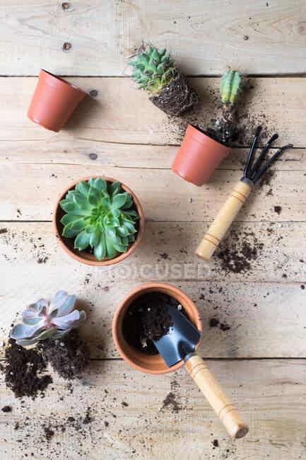 Земледелец посадил красивое кактусное растение — стоковое фото
