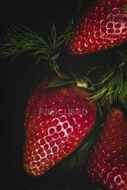Textured delicious strawberry with dill on black background — Stock Photo