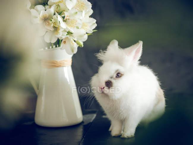 Пухнастий кролик і білі квіти у вазі на темному тлі — стокове фото