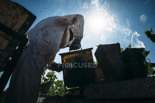 Beekeeper working collect honey — Stock Photo