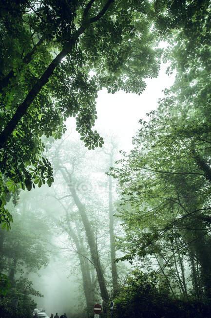 Вид на пышную зелень в парке с высокими деревьями и проложенной дорожкой в ярком свете, Португалия — стоковое фото