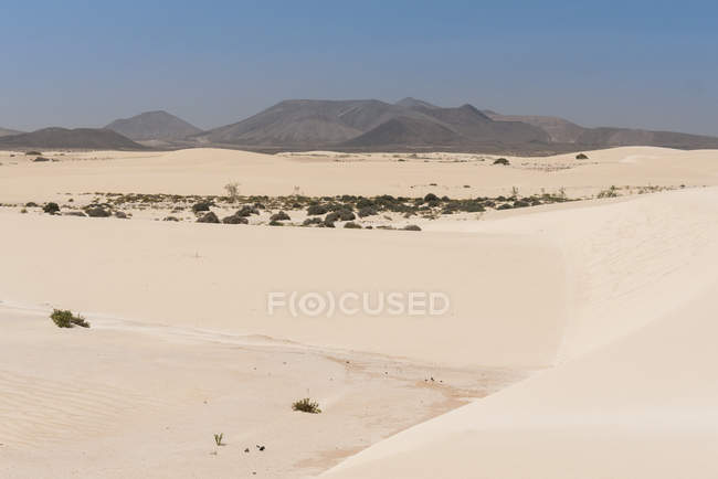 Vegetation on sandy plain with mountains on Canary islands — Stock Photo
