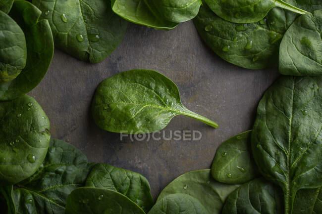 Вид листьев шпината с капельками воды — стоковое фото