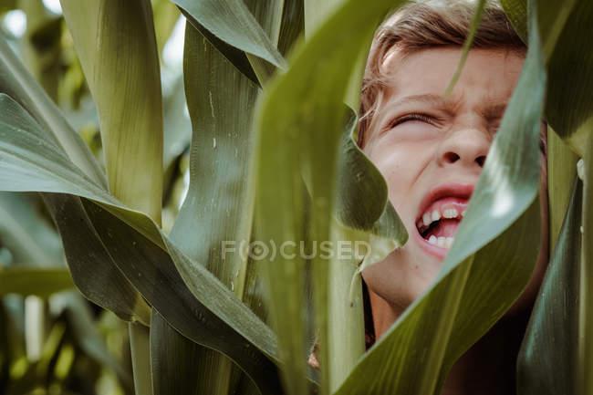 Little boy walking among cornfield — Stock Photo