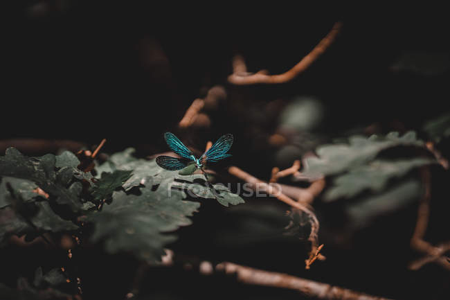 Close-up of amazing dragonfly flying over green leaves and branches in forest — Stock Photo