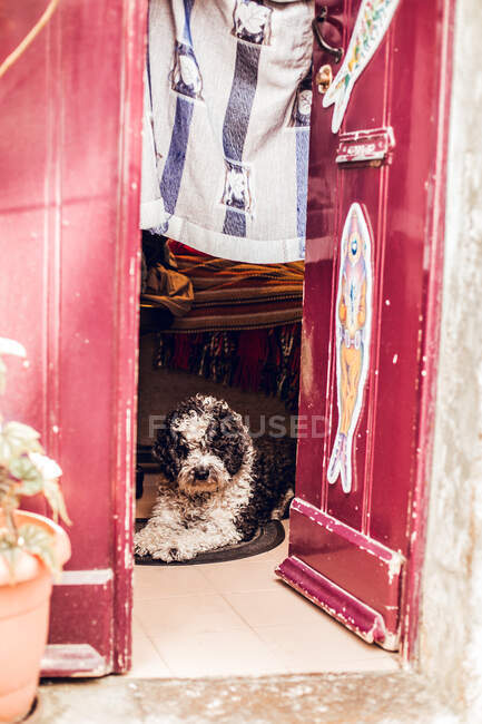 Cute black and white dog lying on small carpet at grungy door in Sintra, Lisboa, Portugal — Stock Photo