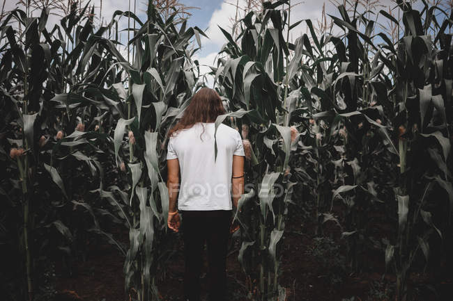 Rear view of young man in corn field plants — Stock Photo