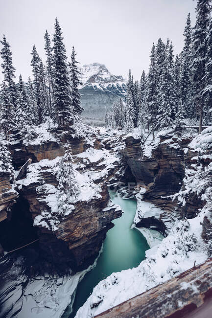 River with snowy banks flowing through cleft?in winter woods with many firs on background with mountains and cloudy sky — Stock Photo