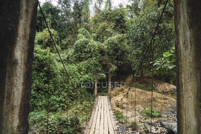 Vecchio ponticello di legno grungy nel verde dei boschi — Foto stock