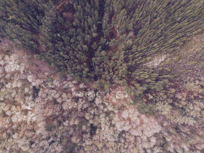 Захватывающий дух вид на маленькие домики, стоящие на поляне возле великолепного леса в Астурии, Испания — стоковое фото
