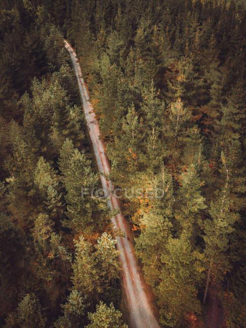 Вид с воздуха на асфальтированную сельскую дорогу в зеленых лесах — стоковое фото